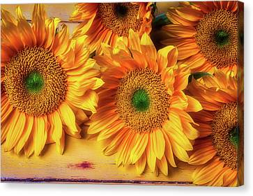 The Magic Of Sunflowers Canvas Print
