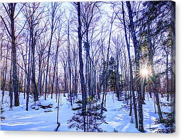 The Many Colors Of Winter 2 Canvas Print by David Patterson