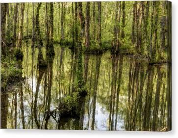 The Marsh Canvas Print by Randy Walton