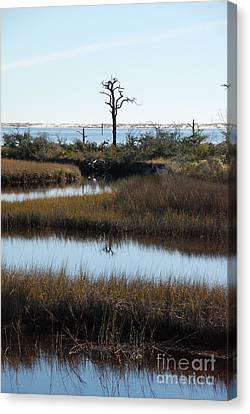 The Marsh Canvas Print by Renee Holder