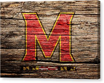 The Maryland Terrapins  Canvas Print by Brian Reaves