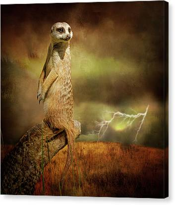 The Meerkat And The Storm Canvas Print by Margaret Goodwin