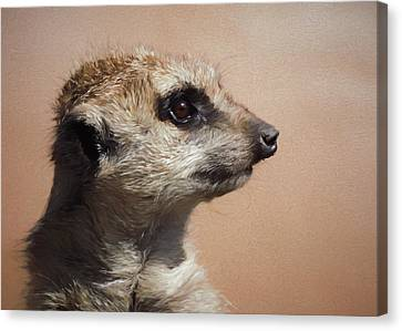 The Meerkat Da Canvas Print by Ernie Echols