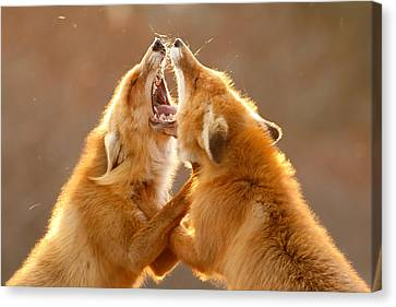The Meeting _ Red Fox Fight Canvas Print