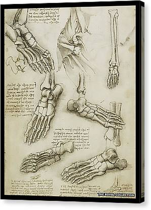 Canvas Print featuring the painting The Metatarsal by James Christopher Hill