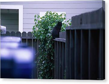 The Meter Cat - Fort Bragg California Canvas Print by Soli Deo Gloria Wilderness And Wildlife Photography