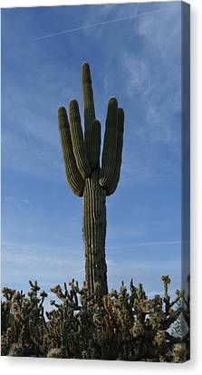 The Mighty Saguaro Canvas Print by Aimee L Maher Photography and Art Visit ALMGallerydotcom