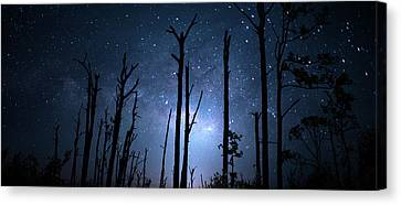 The Milky Way Forest Canvas Print by Mark Andrew Thomas