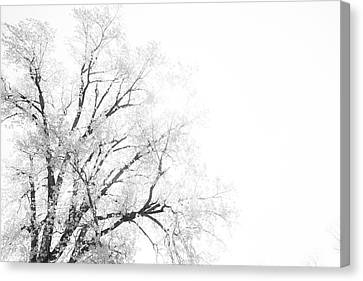 Canvas Print featuring the photograph The Minimal Tree by Joel Witmeyer