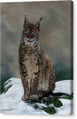 The Missing Lynx Canvas Print