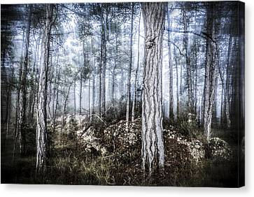The Misty Forest Canvas Print by Marc Garrido