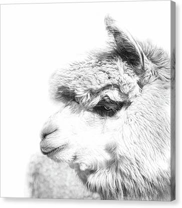 Canvas Print featuring the photograph The Misty by Robin-Lee Vieira