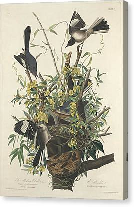 The Mockingbird Canvas Print by Rob Dreyer