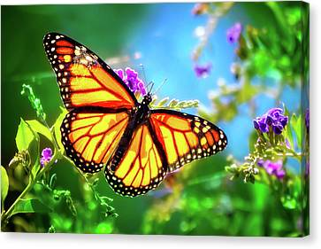 The Monarch  Canvas Print by Mark Andrew Thomas