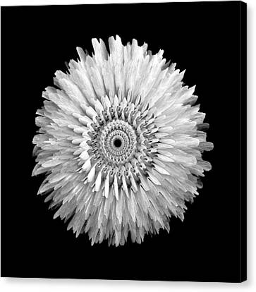The Monochromatic Mandala Of Rose Canvas Print by Jacqueline Migell