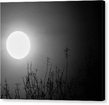 The Moon And The Stars Canvas Print by John Glass