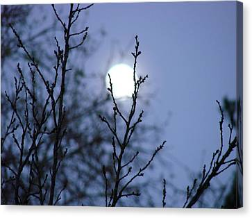 The Moon Canvas Print by Liz Vernand