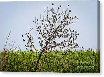 Canvas Print featuring the photograph The More The Merrier- Tree Swallows  by Ricky L Jones