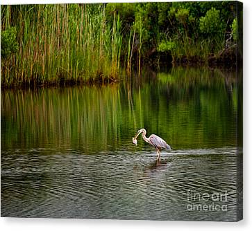 The Morning Catch Canvas Print by Mark Miller