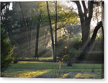 The Morning Sunlight Comes Shining Through Canvas Print