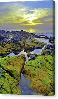 Canvas Print featuring the photograph The Mossy Rocks At Sunset by Tara Turner