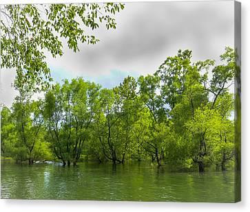 Wooden Platform Canvas Print - The Murphy River Walk by Lisa Bell
