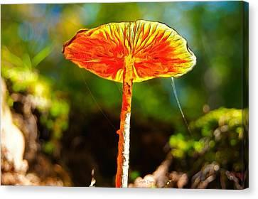 Fungus Canvas Print - The Mushroom 10 - Pa by Leonardo Digenio