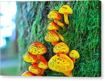 Vegetables Canvas Print - The Mushroom 12 - Mm by Leonardo Digenio