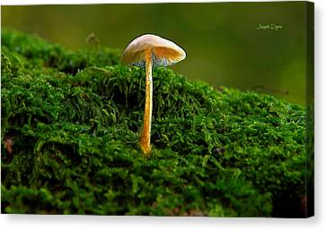 Mixed Canvas Print - The Mushroom 15 - Da by Leonardo Digenio