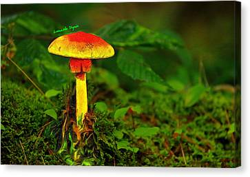 Hybrid Canvas Print - The Mushroom 16 - Da by Leonardo Digenio