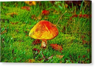 The Mushroom 19 - Da Canvas Print by Leonardo Digenio