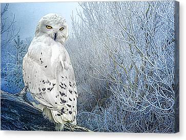 The Mystical Snowy Owl Canvas Print by Brian Tarr