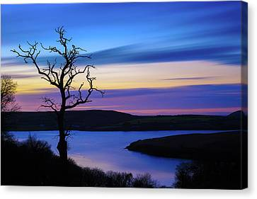 Canvas Print featuring the photograph The Naked Tree At Sunrise by Semmick Photo