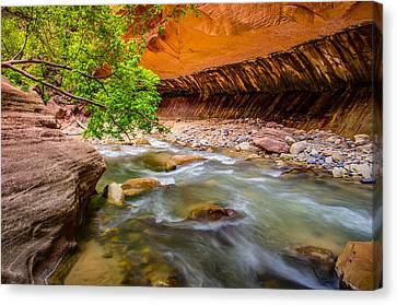 The Narrows Zion National Park Canvas Print by Scott McGuire