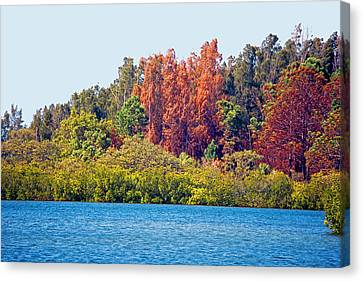 Reds Of Autumn Canvas Print - The Nature Coast by Donna Proctor