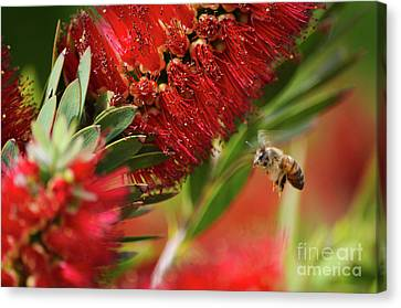 The Nature Of Pollenation Canvas Print by Matanel Kaye
