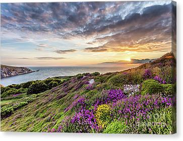 The Needles At Sunset Canvas Print