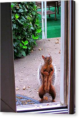 The Neighborhood Flasher Canvas Print by Guy Ricketts