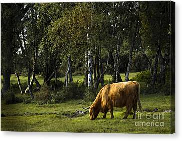 the New forest creatures Canvas Print