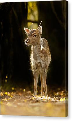 The New Generation Canvas Print by Roeselien Raimond