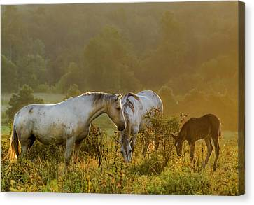 The Next Generation Canvas Print by Ron  McGinnis