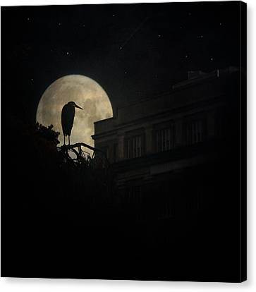 Canvas Print featuring the photograph The Night Of The Heron by Chris Lord