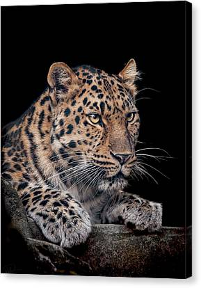 The Night Watchman Canvas Print by Paul Neville
