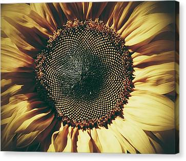 Canvas Print featuring the photograph The Not So Sunny Sunflower by Karen Stahlros