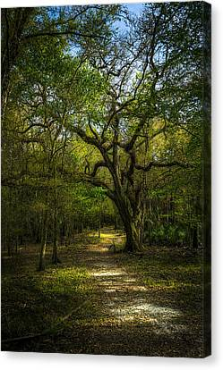 The Oak Trail Canvas Print by Marvin Spates
