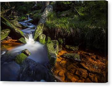 the Oder in the Harz National Park Canvas Print