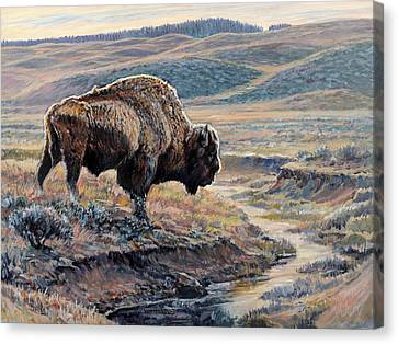 The Old Bull Canvas Print by Steve Spencer