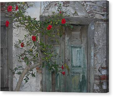 The Old Door And The Rose Bush Canvas Print by Wilhelm Terrada