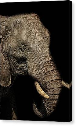 The Old Elephant Canvas Print by Martin Newman