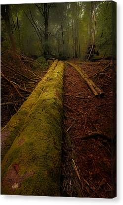 The Old Mossy Trunk Canvas Print